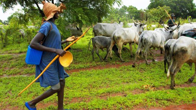 'No going back' We won't return to North, Fulani herdsmen tells Northern elders