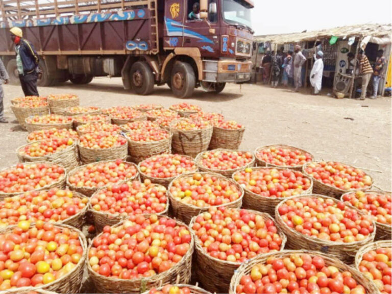 'This is a disaster' Tomato, onion farmers, marketers lose big as blockade persists