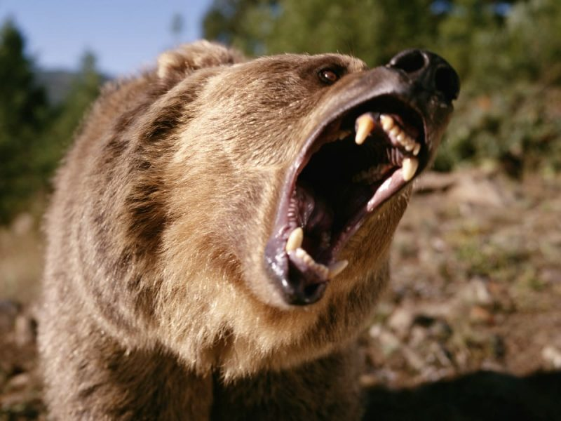 'Terrible!' 39 year-old woman killed, partially eaten by bear as she walked dogs