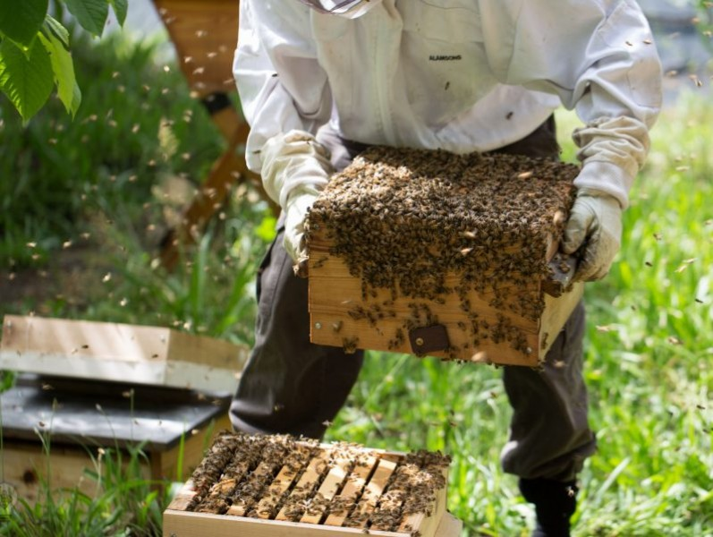 'Absence of necessary legislation' Export Council reveal that Nigeria loses $10bn annually to honey importation